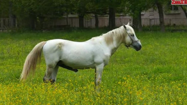 Horse in the field gets horny